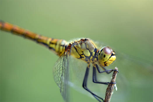 0364 Dragonfly