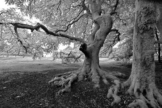0427 Tree story VI