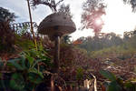 2747 The secret world of mushrooms