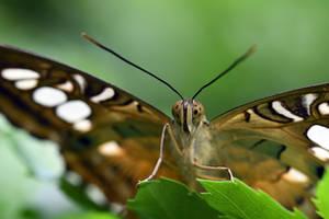 2405 Butterfly
