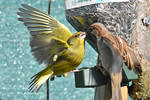 5014 Greenfinch and sparrow