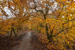 3905 In the heart of autumn IX