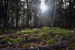 3604 Moss under the sunlight