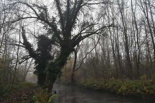 3998 Into the mist IX
