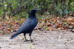 2963 Crow