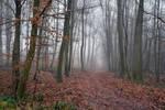 4321 Into the mist XI