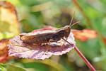 0364 Grasshopper in the sun