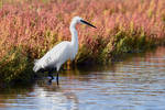 3350 Little Egret in the swamp by RealMantis