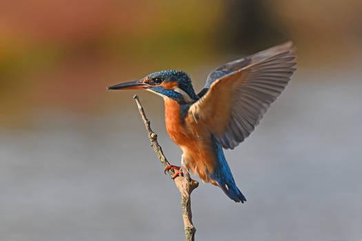 3173 Kingfisher