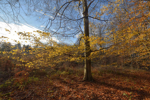 1261  In the heart of autumn