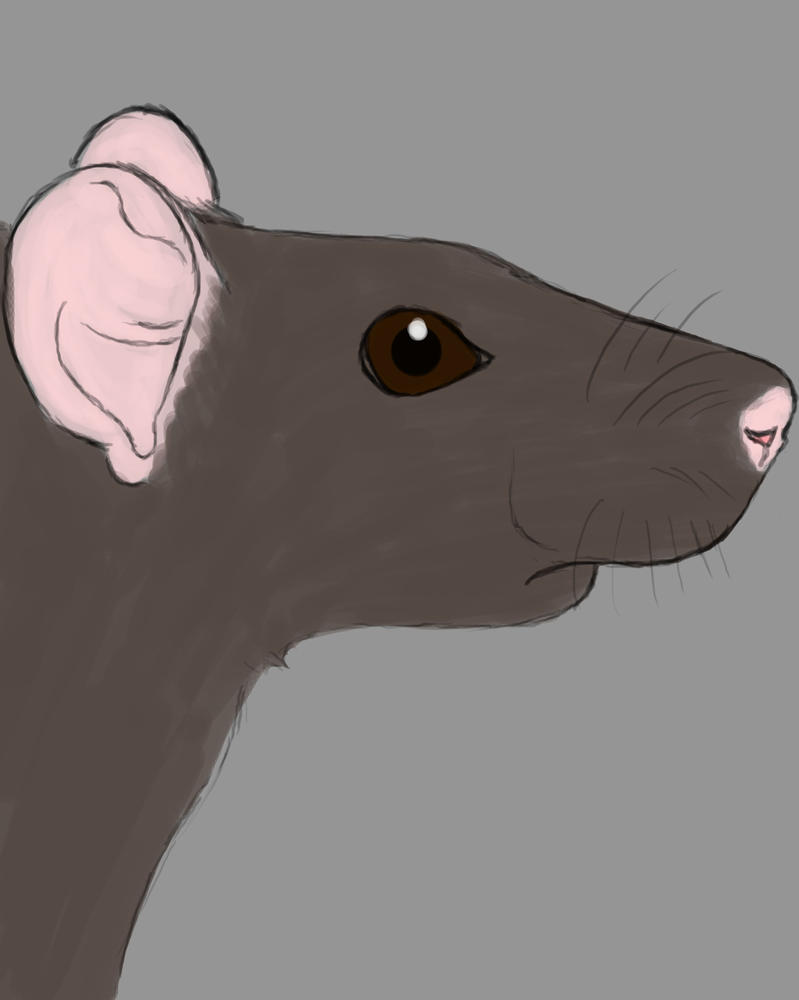 Rat Daily sketch #475 by GothicVampireFreak