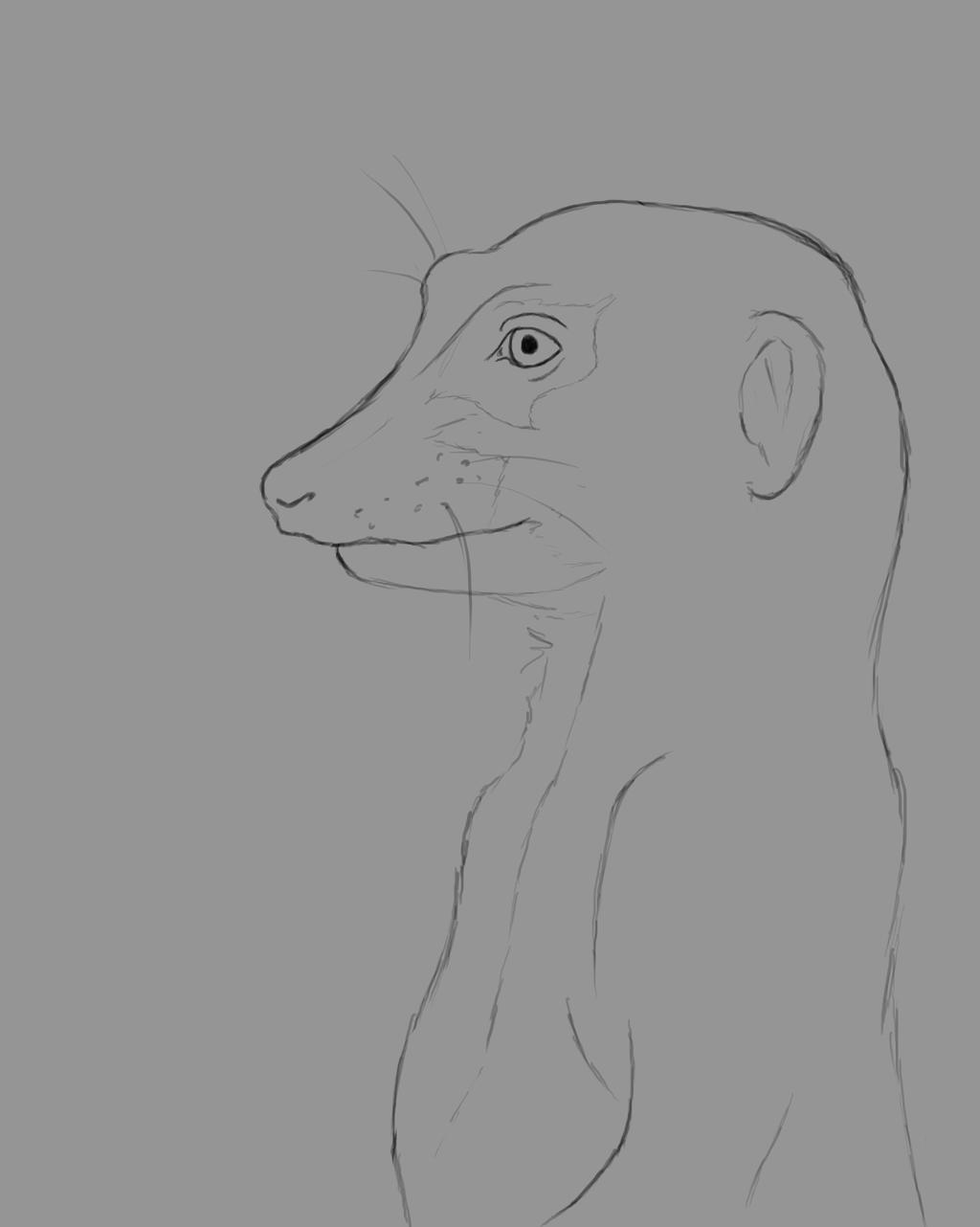 Meerkat Daily sketch #657 by GothicVampireFreak