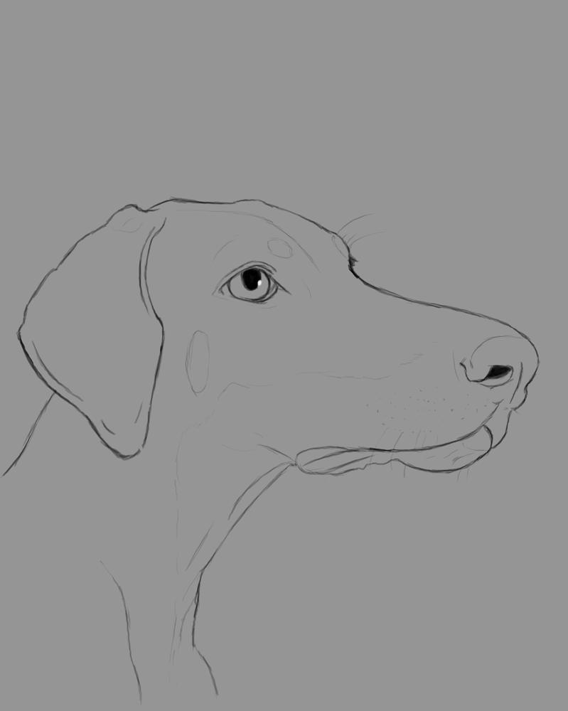 Doggo Daily sketch #661 by GothicVampireFreak