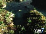 Water n' Grass...