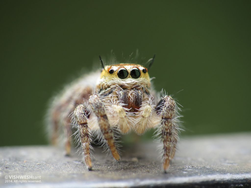 Spider by Vishw