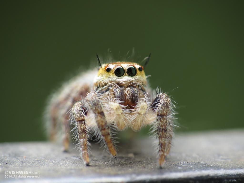 Spider by Vishw
