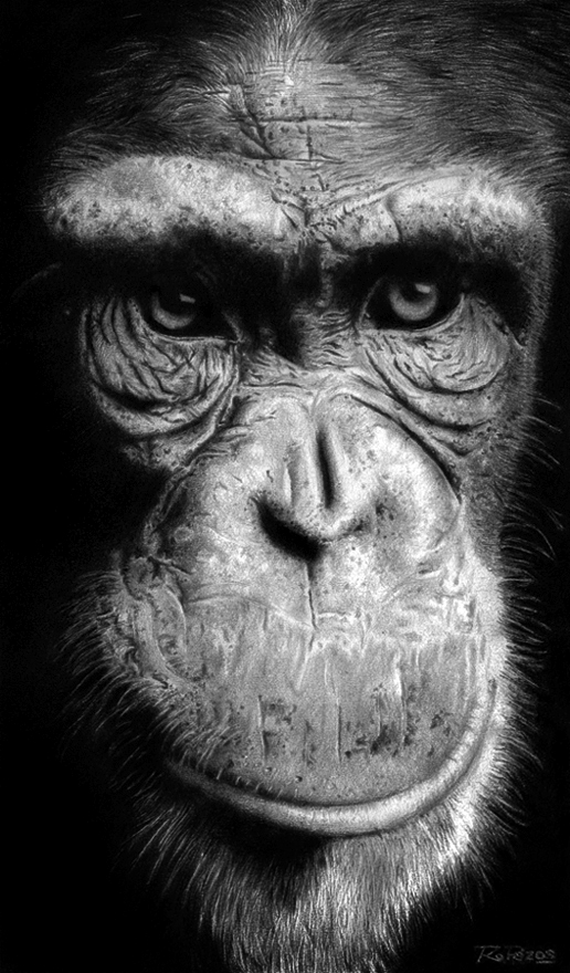 Chimpance by raulrk