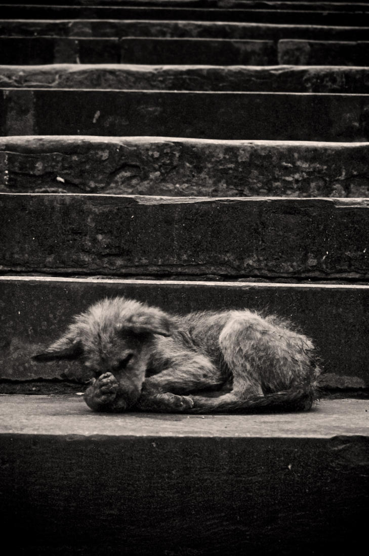 sad dog by smythe01 on DeviantArt