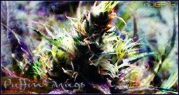 Puffin' nugs by nuGFX