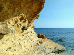 rockshore