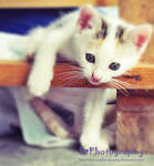 My little cat...