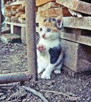 Hello Kitty... by SimonaPhotography
