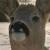 This Deer (EMOTICON)