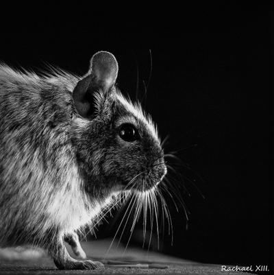 Black and White by RachaelXIII