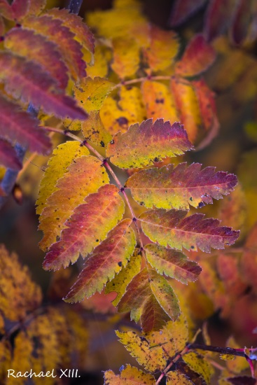 autumn colors by RachaelXIII