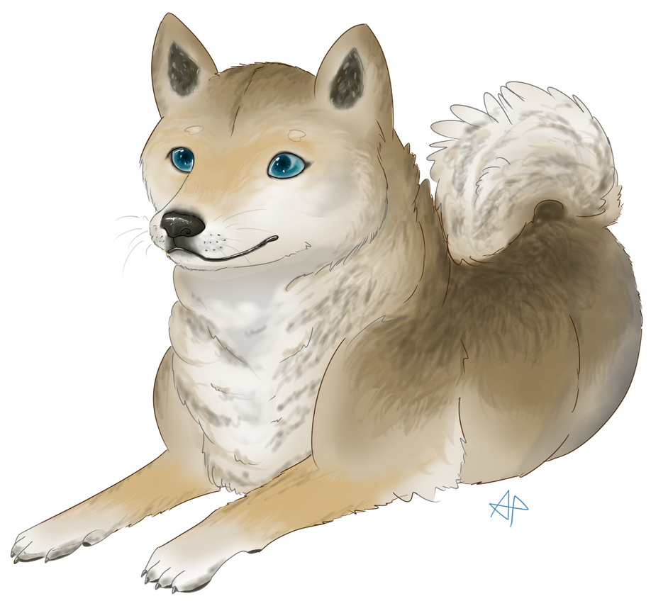 Shibe by Maplemay on DeviantArt