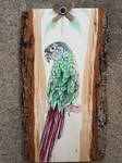 Conure Gift/Commission