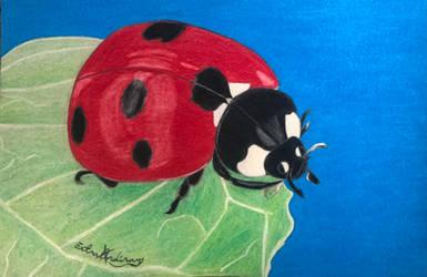 Ladybug: Christmas gift 5/8 (Nov 2020)