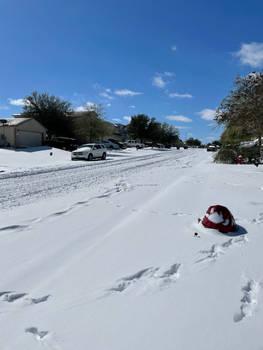 Amazing Texan snow day (Feb 2021)