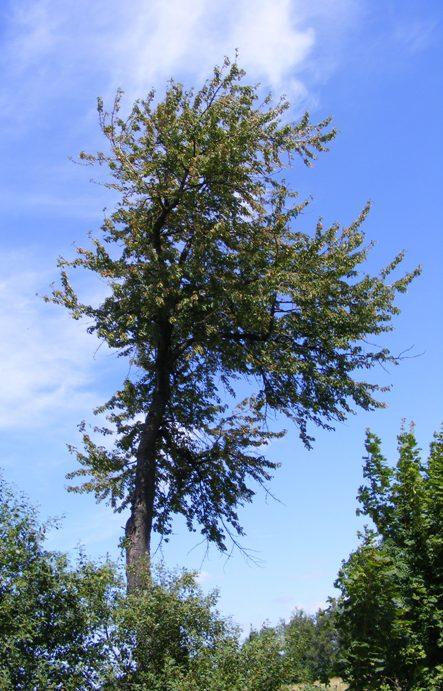 Tree 2 by lishagran