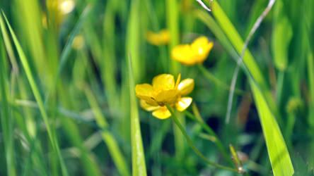 Yellow flower in the field by Belolis