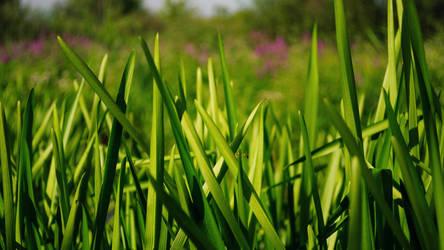Grass by Belolis