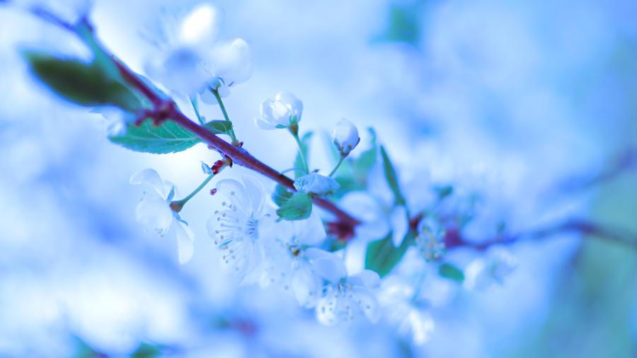 Spring flower by Belolis