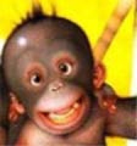 MonkeyTail6's Profile Picture