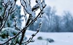Frozen Tree HD Wallpaper