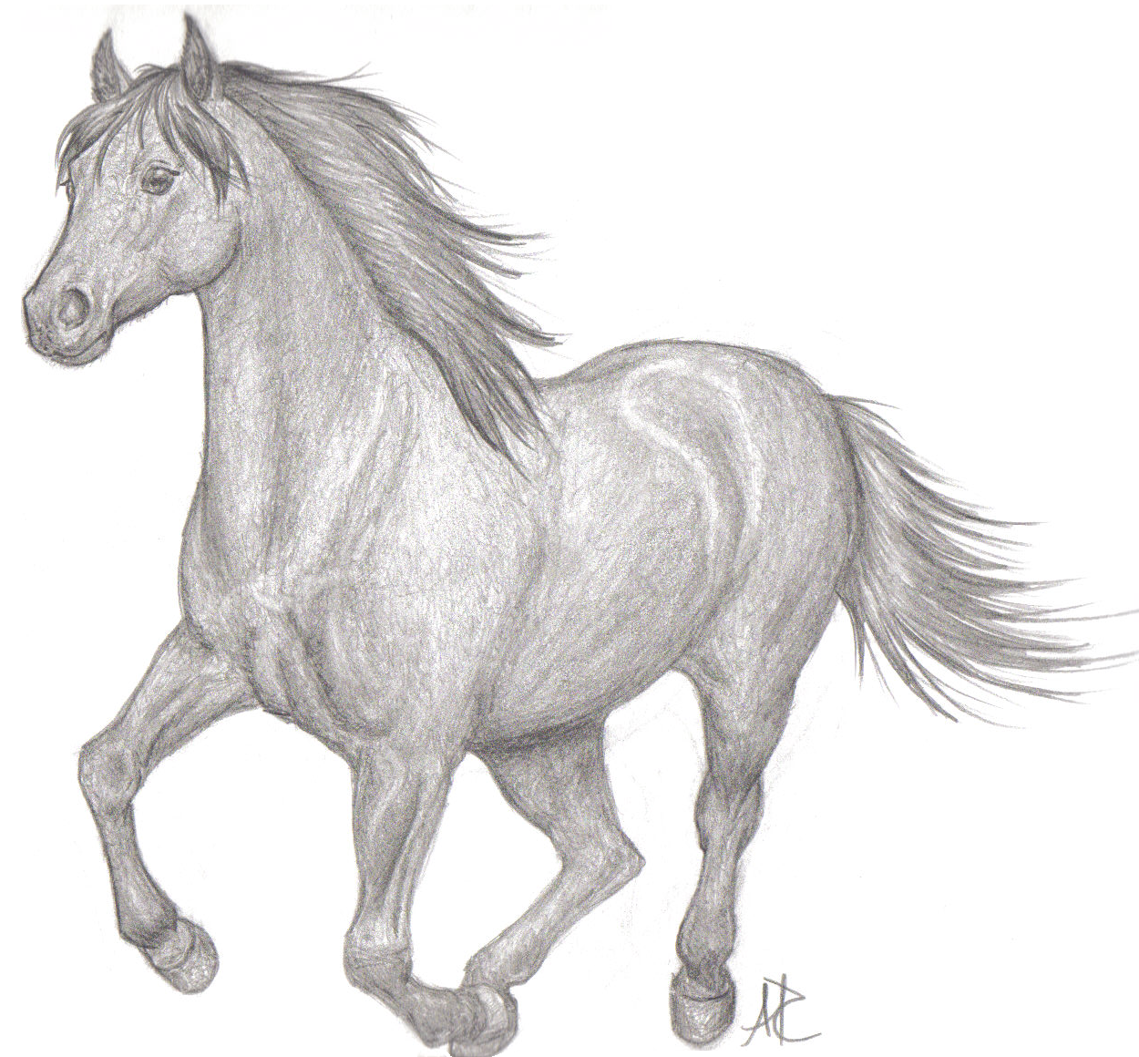 Running horse drawing easy - photo#16