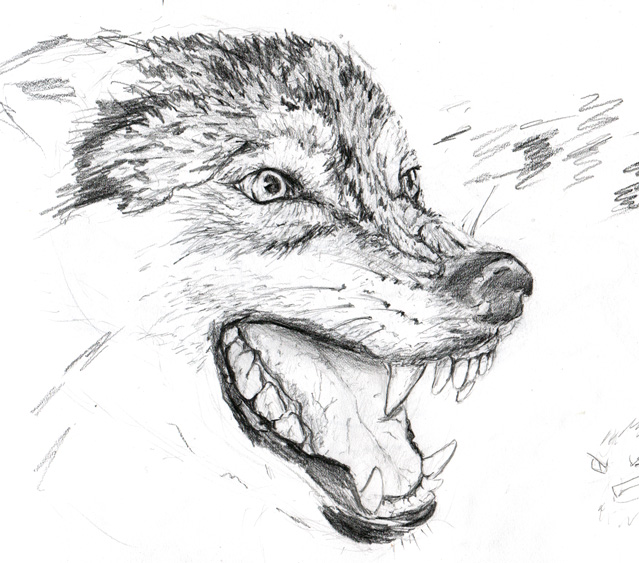 Angry Wolf by SilmaSan on DeviantArt