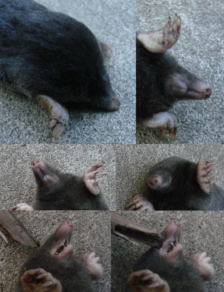 Mole- head by Weirda208