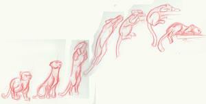 Animal Motion Study 2: cat