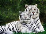 Cat-Wallpaper-big-cats