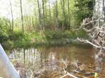Swamp Stock 1