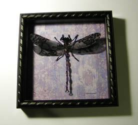 Shadowbox Dragonfly - Lavender Glass, Black Lace