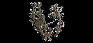 3 - Rosmarinus Officinalis