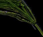 7 - Equisetum arvense