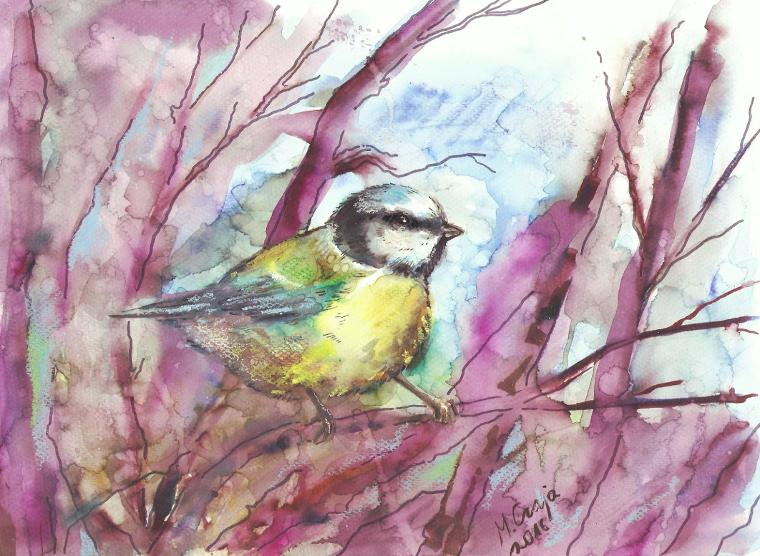 Blue tit by SirSubaru