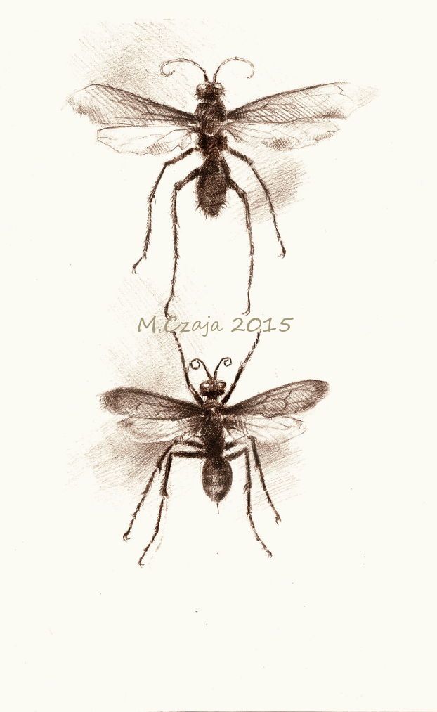 insect 1 by SirSubaru